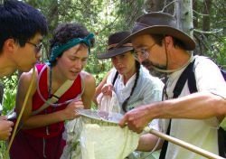 people examining a bug net