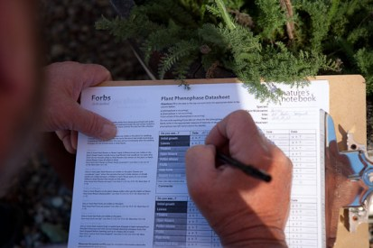 CA phenology project forbs form