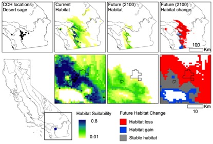 Maps of desert sage (Salvia eremostachya) locations from CCH, climatically suitable habitat, and projected changes in climatically suitable habitat for the end of the century (2100) assuming a future of high greenhouse gas emissions. Boundary shows Boyd Deep Canyon Desert Research Center, one of the largest NRS reserves. Map credit: Erin Riordan