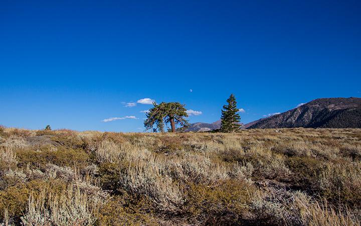 Valentine Eastern Sierra Reserve