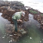 Refuges against rising ocean acidification