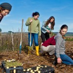 From brussels sprouts field to coastal prairie