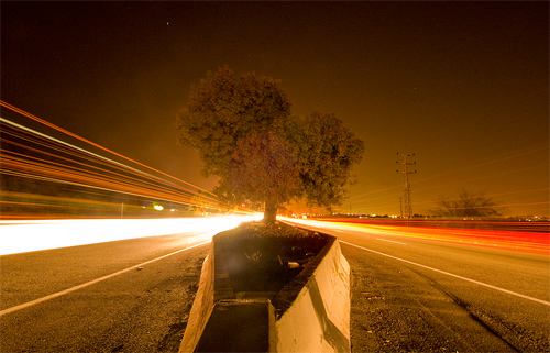 highway tree
