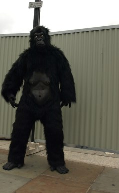 Gorilla Suit via Wikimedia commons