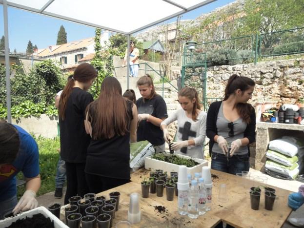 Volonterska akcija - presađivanje sadnica u Rina Mašera