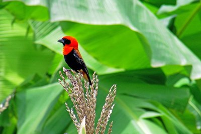 Kilombero Valley, Birding