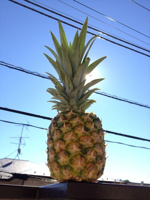 スーパーで俺に買ってくれとアピールしていたパイナップル君と晴れ渡る秋空