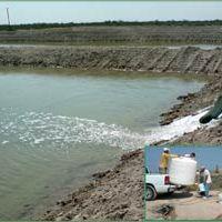 Comprueban investigadores el beneficio de aplicar cal al cultivo de camarón de estanque
