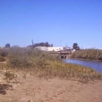 Investigadores del Dictus de la Unison comprueban el beneficio de aplicar cal al cultivo de camarón de estanque