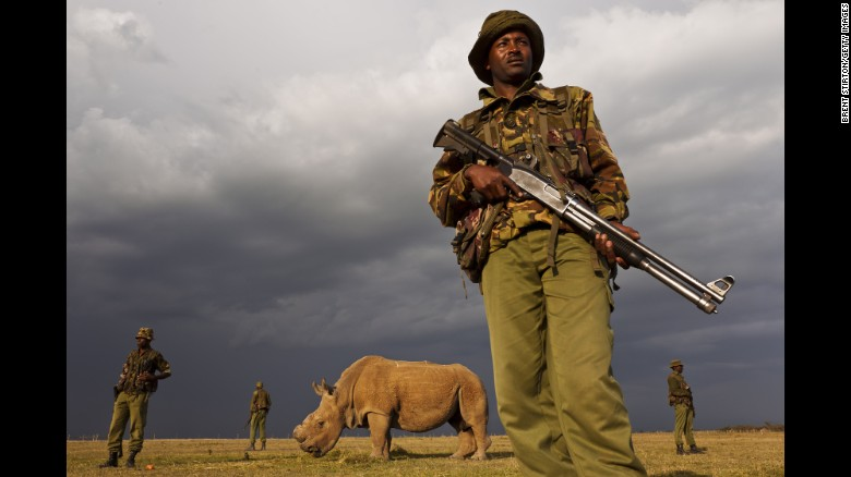 Under 24 hour Armed protection in Sudan - The last remaining male White Rhino!