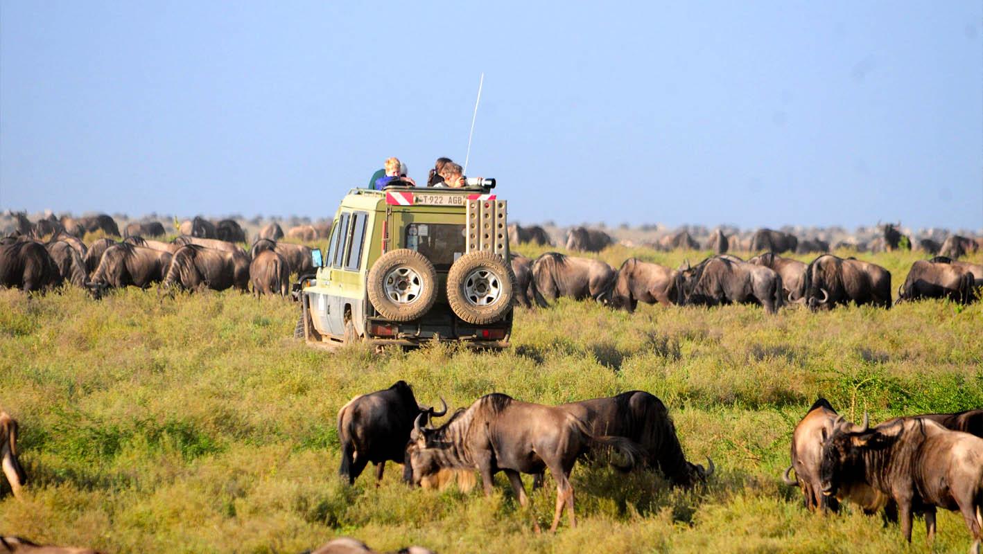 Serengeti national park game drives