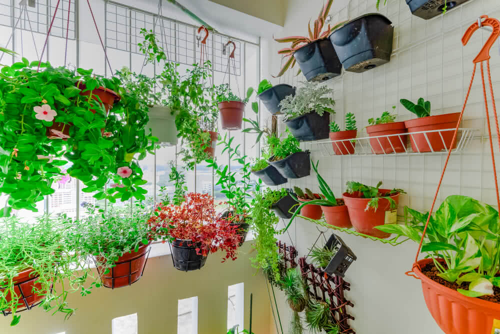 Image Result For Good Plants To Grow On An Apartment Balcony