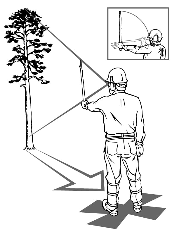The Five Step Felling Plan - Step 1 - Heights, Hazards, and Lean
