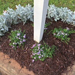 Making Changes to the Mailbox Garden Bed