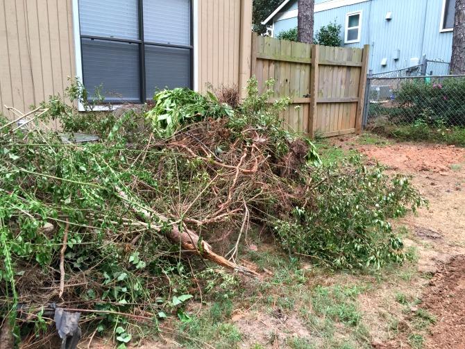 backyard-overhaul-huge-pile-of-plants-roots-and-stump-chunks