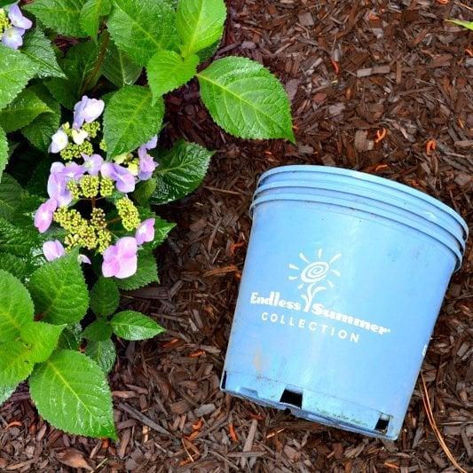 My New Hydrangea Corner Garden Ugly Duckling House