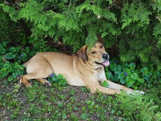 Ugly Mutts Dog Rescue Hamilton Ontario