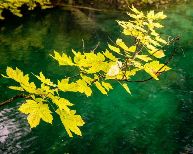 Plants in Plitvice Lakes NP