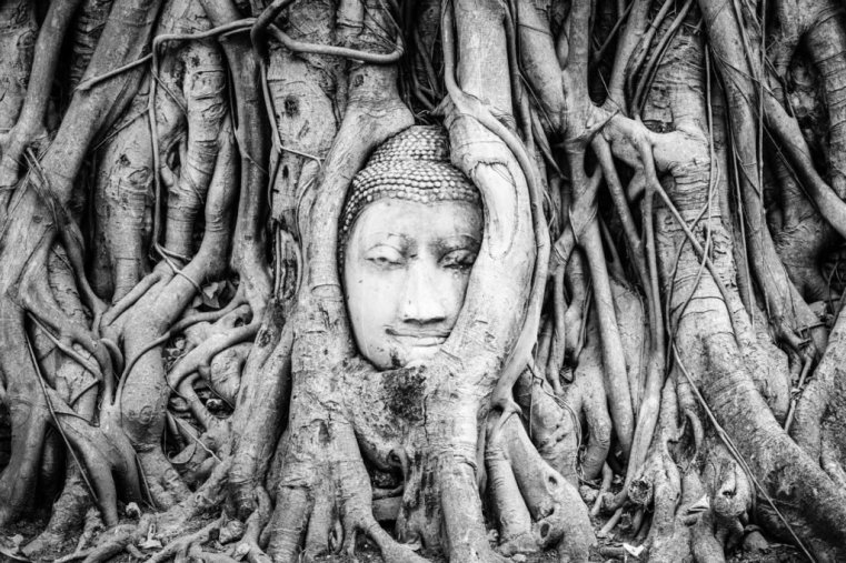 Buddha Head, Wat Mahathat, Ayutthaya