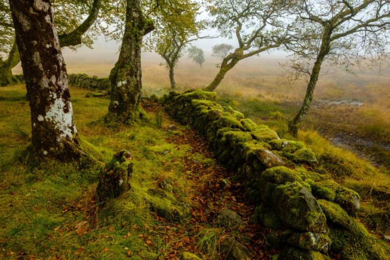 Moss covered trees and rocks, Kilchurn Castle, Loch Awe, Scotland