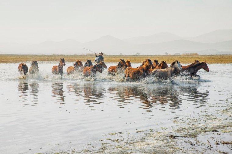 Herd of wild horses crossing a body of water, Cappadocia