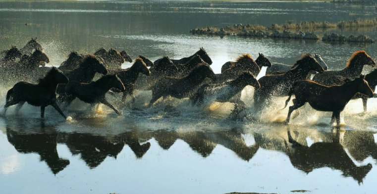 Herd of wild horses crossing a body of water, Cappadocia