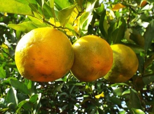 Kalabria – w królestwie bergamotki