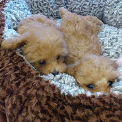 冬対策!愛犬を寒さから守る6つの方法