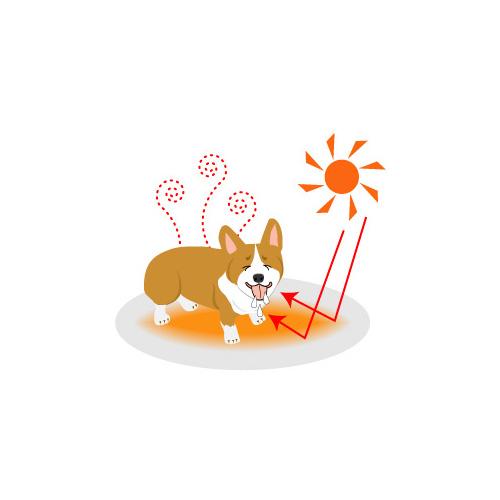 犬の暑さ対策-必ず知っておきたい10の事-