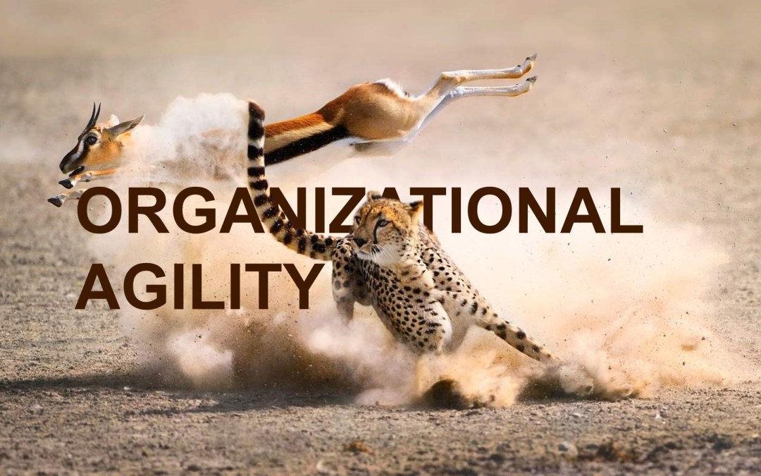 What is Organizational Agility?