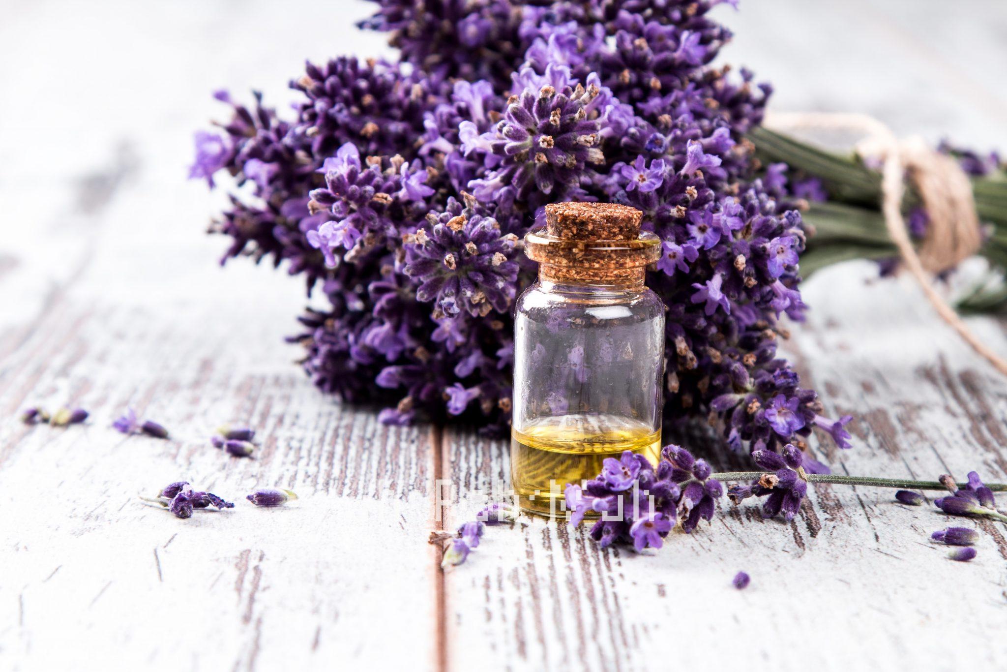 Lavender 4042 oil / Lavender 40/42