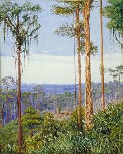 View of Matang, Borneo