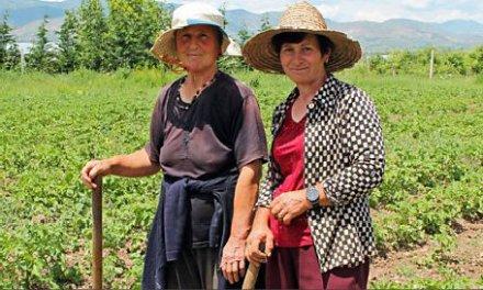 BBC Radio 4: Albania and the Cheese Road (Audio)