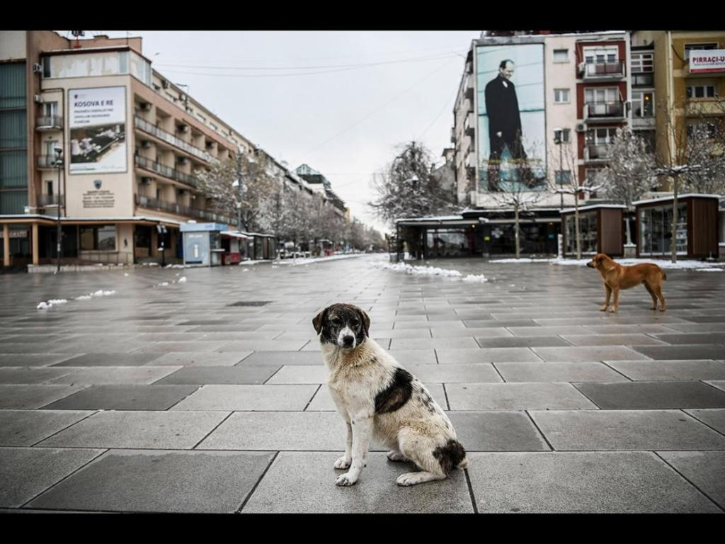 Stray dogs stand on a deserted square in Pristina on April 1, 2020, during a government-imposed curfew from 5pm to 5am, as part of preventive measures against the spread of the Covid-19, the novel coronavirus. Image by : ARMEND NIMANI/AFP via Getty Images