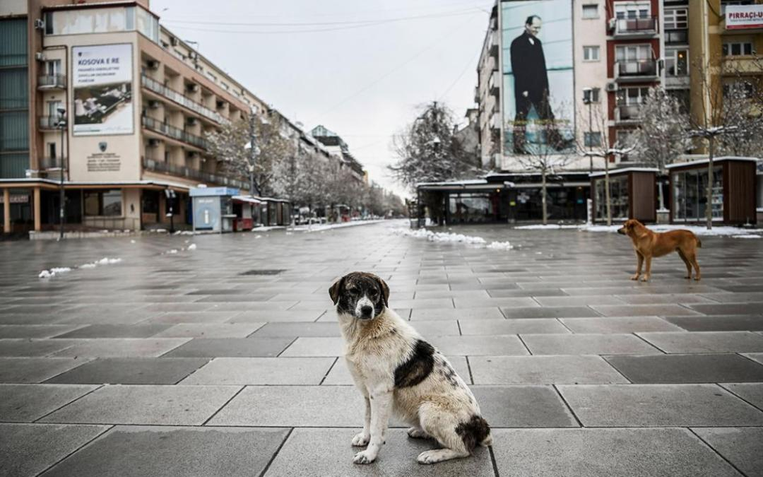 Photo of the day: Stray dogs stand on a deserted square in Pristina
