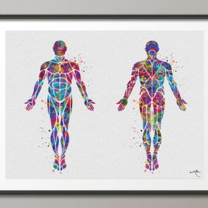 Muscular System Watercolor Print Human Body Anatomy Art Medical Orthopedic Wall Hanging Graduation Gift Clinic Decor-1101