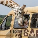 West Midland Safari Park Hotel Break from £98 per Family
