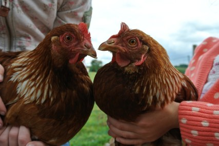 guests-hens-2