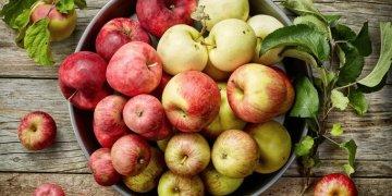 أنواع التفاح الأكثر مقاومة للجفاف