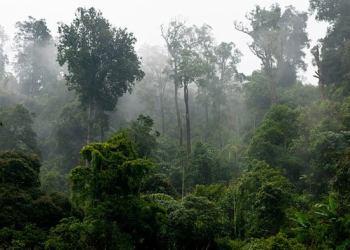 شركات عالمية و أمريكا والمملكة المتحدة والنرويج يتعاونون لإنقاذ الغابات الاستوائية المطيرة
