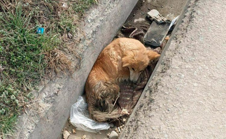 تحديد المسؤولية الجنائية للقسوة على الحيوانات