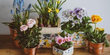 كل ما تحتاج لمعرفته حول العناية بالزهور وأوراق الشجر في منزلك
