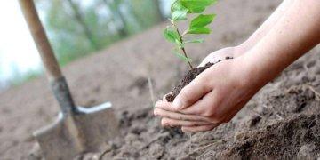 لرئيس والمسؤولون الحكوميون والسفراء سيزرعون الأشجار في فوديتسيا