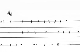 how to read ukulele music notation illustration featuring birds sitting on a wire