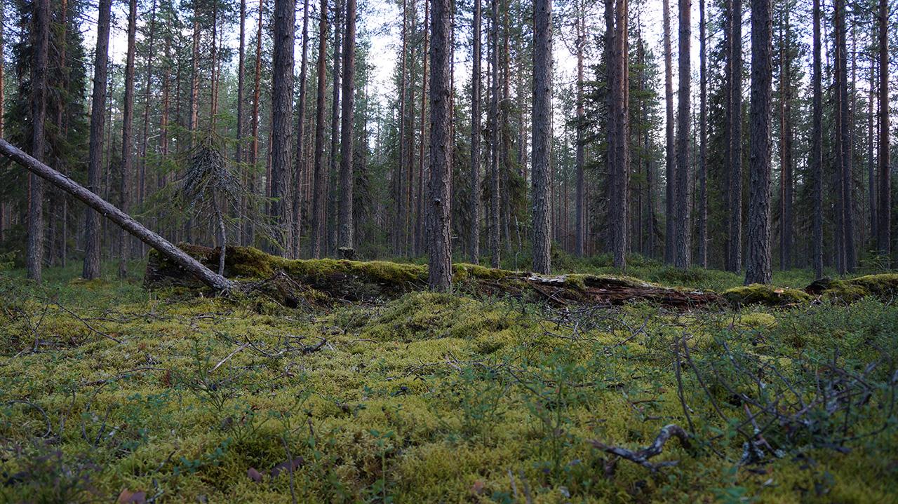 Räätälöity retkeilykurssi, Suomi
