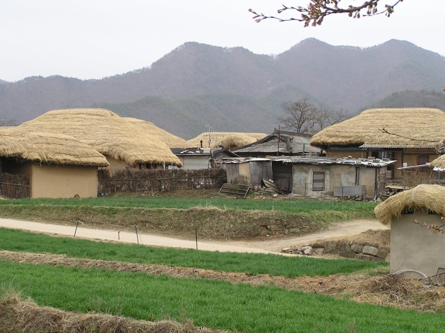 Thatched roofs are common among the traditional  homes