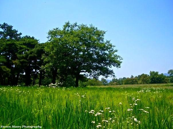 GeuRim Forest