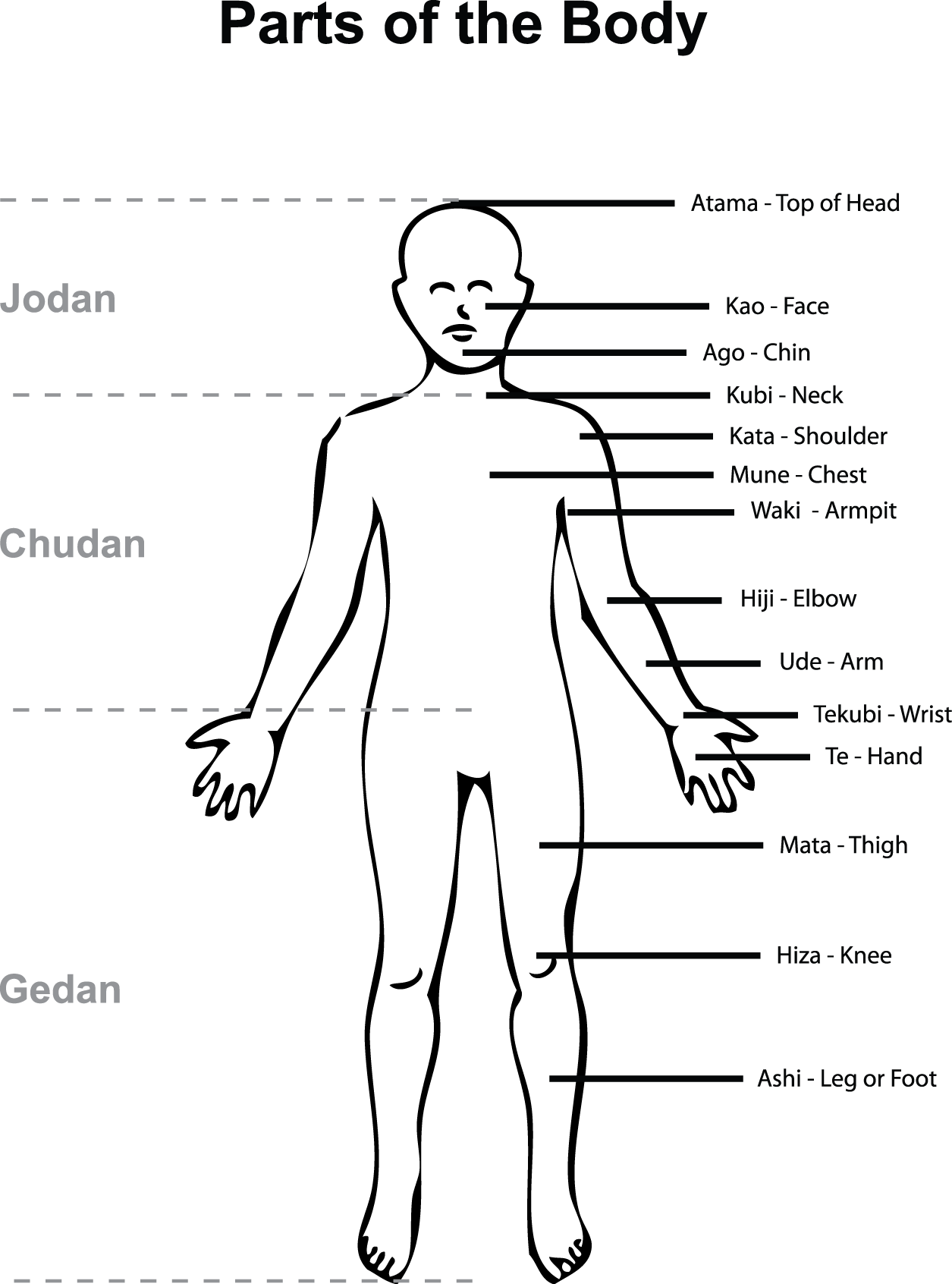 Parts Of The Body