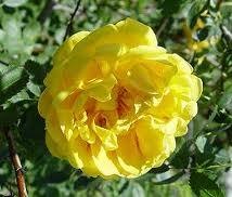 roseto5