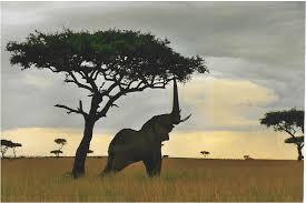 Elefante nella savana africana